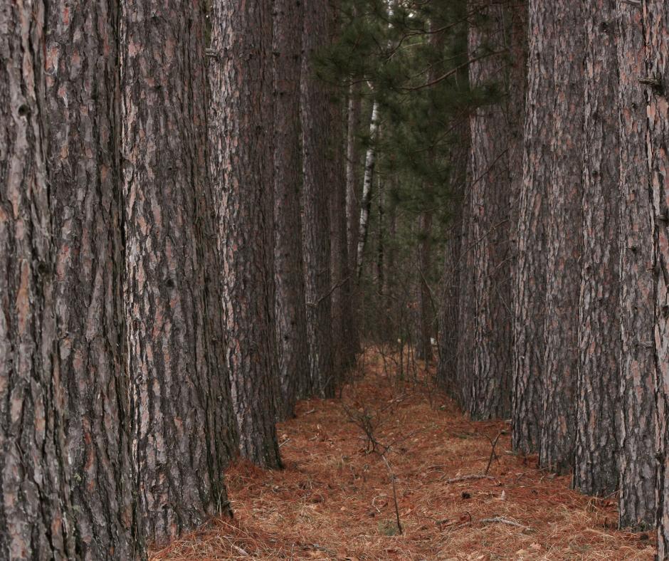 The South Carolina Tree Farm Certification Program