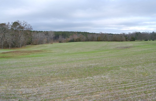 12450 HWY 151, Jefferson, Chesterfield County, 29718, SC, Farm for Sale 4