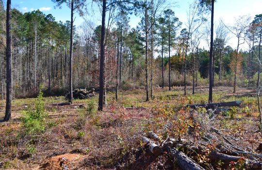 180 Evans Valley Road, Chesterfield, Chesterfield County, 29709, SC, Land for sale 12