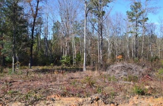 180 Evans Valley Road, Chesterfield, Chesterfield County, 29709, SC, Land for sale 8