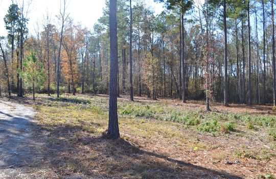 180 Evans Valley Road, Chesterfield, Chesterfield County, 29709, SC, Land for sale 9