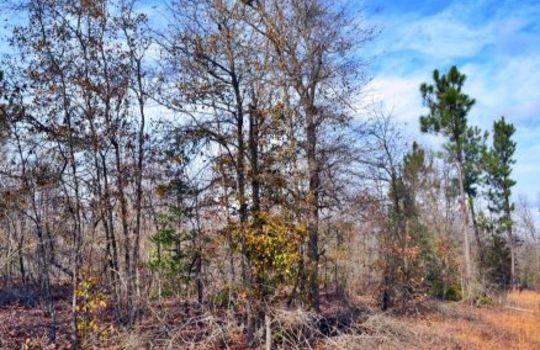 Aaron Temple Church Orad, Bennetsville, Marlboro County, 29512, SC, Land for Sale 1