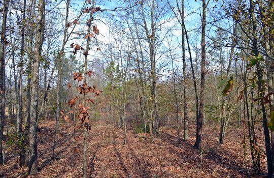 Aaron Temple Church Orad, Bennetsville, Marlboro County, 29512, SC, Land for Sale 11