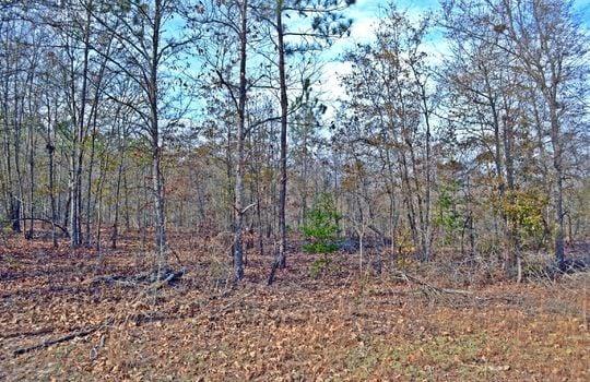 Aaron Temple Church Orad, Bennetsville, Marlboro County, 29512, SC, Land for Sale 14