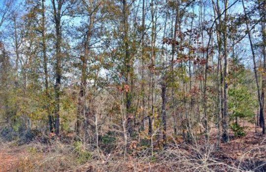 Aaron Temple Church Orad, Bennetsville, Marlboro County, 29512, SC, Land for Sale 3