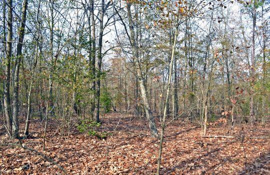 Aaron Temple Church Orad, Bennetsville, Marlboro County, 29512, SC, Land for Sale 7