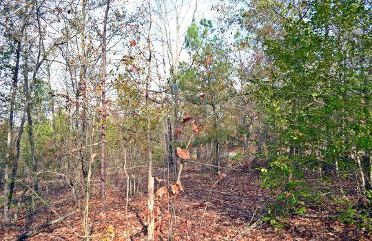 Aaron Temple Church Orad, Bennetsville, Marlboro County, 29512, SC, Land for Sale 8