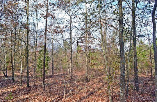 Aaron Temple Church Orad, Bennetsville, Marlboro County, 29512, SC, Land for Sale 9