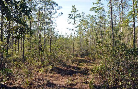Antenna Farm Road SE Bolivia Brunswick County North Carolina Land For Sale 11