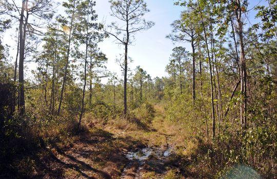 Antenna Farm Road SE Bolivia Brunswick County North Carolina Land For Sale 16