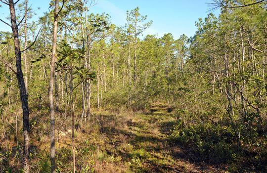 Antenna Farm Road SE Bolivia Brunswick County North Carolina Land For Sale 17