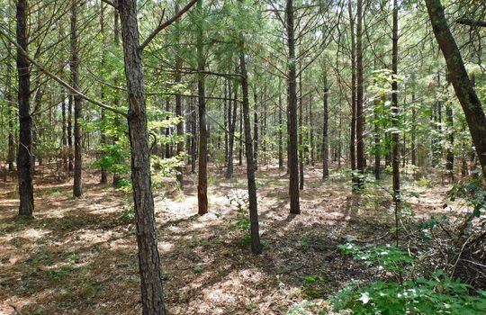 1226 Rollings Road Pageland SC 29728 Chesterfield County Acreage For Sale (18)