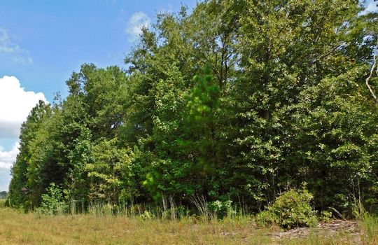 1226 Rollings Road Pageland SC 29728 Chesterfield County Acreage For Sale (22)