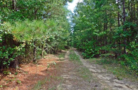 1226 Rollings Road Pageland SC 29728 Chesterfield County Acreage For Sale (23)