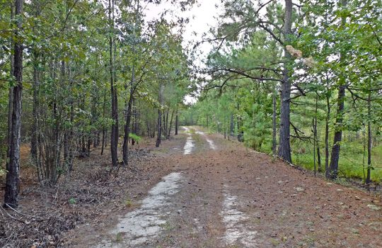 1226 Rollings Road Pageland SC 29728 Chesterfield County Acreage For Sale (25)