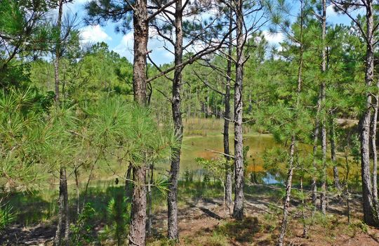 1226 Rollings Road Pageland SC 29728 Chesterfield County Acreage For Sale (29)