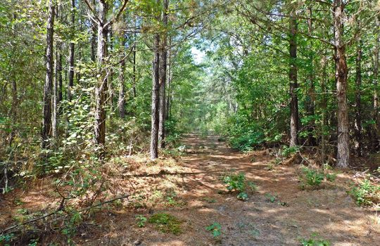 1226 Rollings Road Pageland SC 29728 Chesterfield County Acreage For Sale (36)