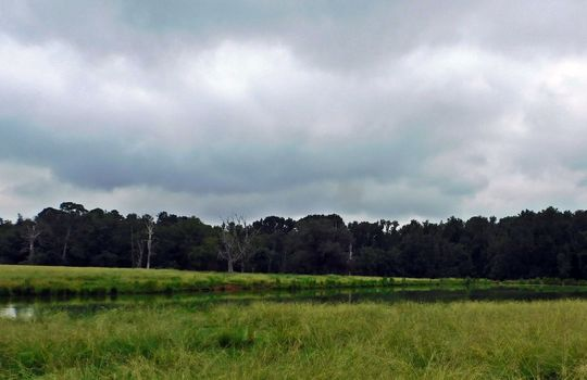 13893 Hwy 9 Chesterfield SC 29709 Pasture Pond Acreage For Sale (14)