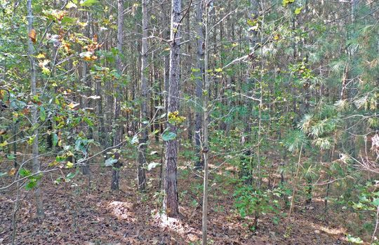Redfearn Lane Chesterfield SC 29709 Timber Recreation Hunting Land (15)