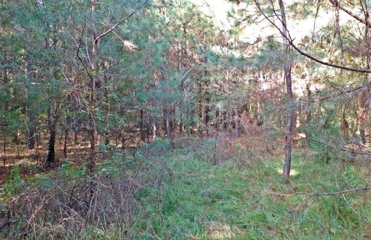 Redfearn Lane Chesterfield SC 29709 Timber Recreation Hunting Land (16)