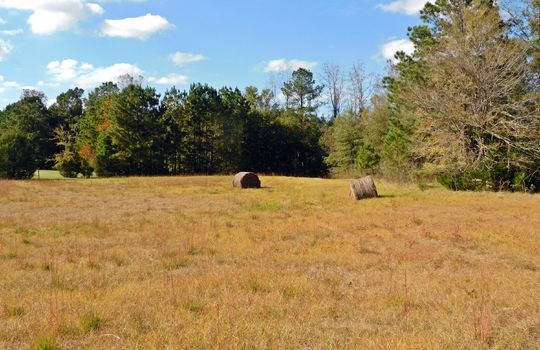 Redfearn Lane Chesterfield SC 29709 Timber Recreation Hunting Land (8)