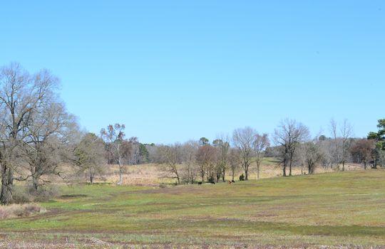 Hwy 151 Jefferson SC Lynches Riverfront Farm (54)