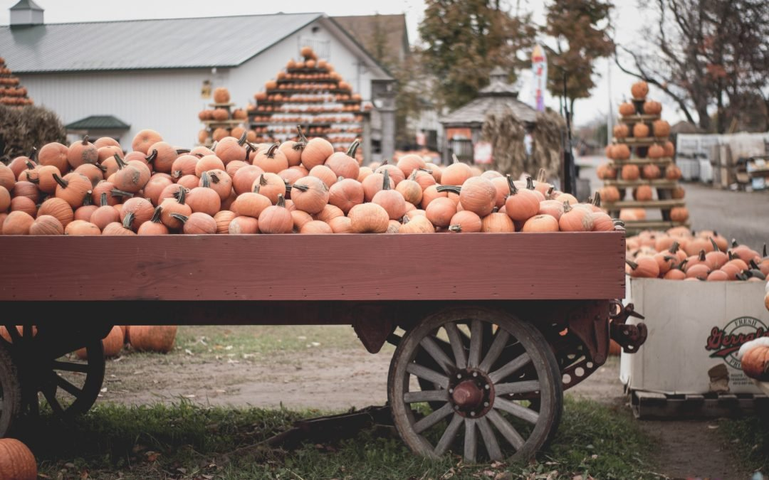 Middle Tennessee Pumpkin Patches 2018