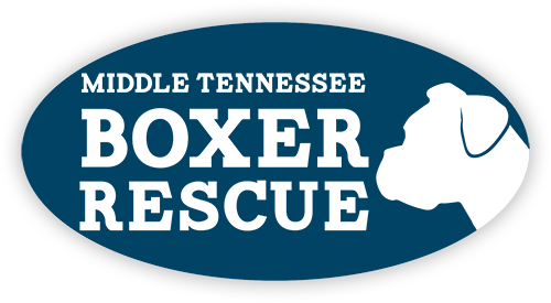 Middle Tennessee Boxer Resuce