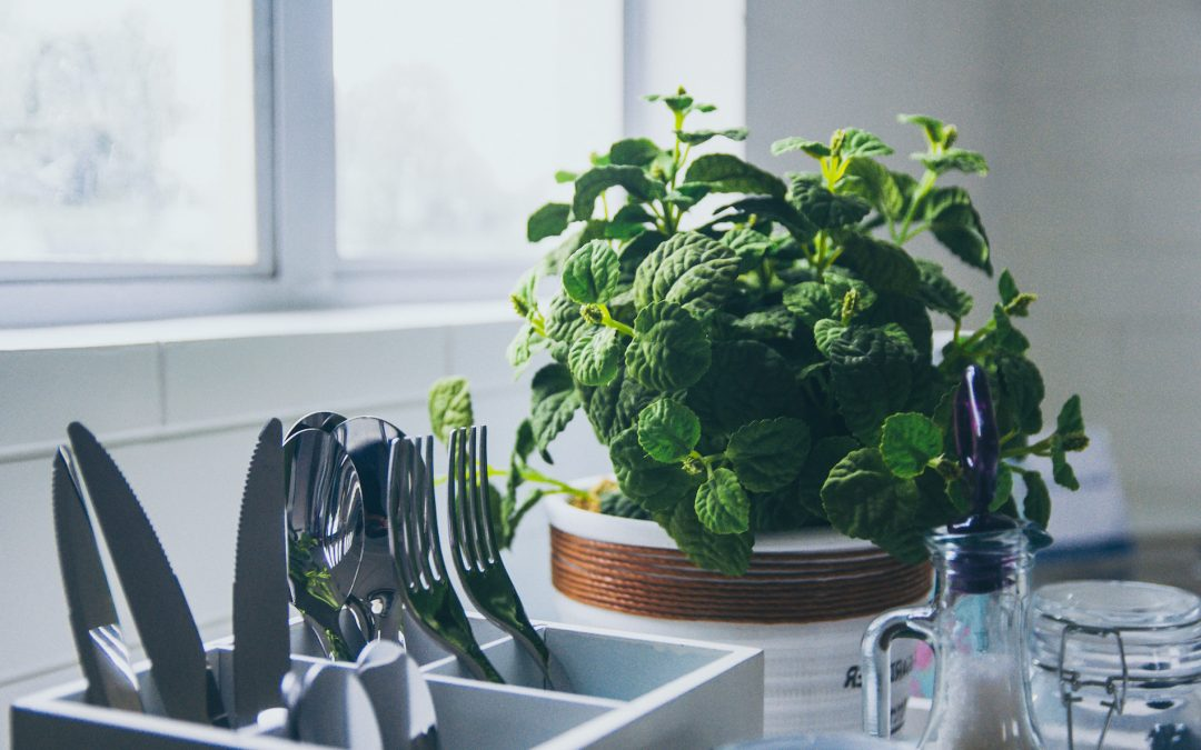 Breathe Easy: Bring Life to Your Home with House Plants
