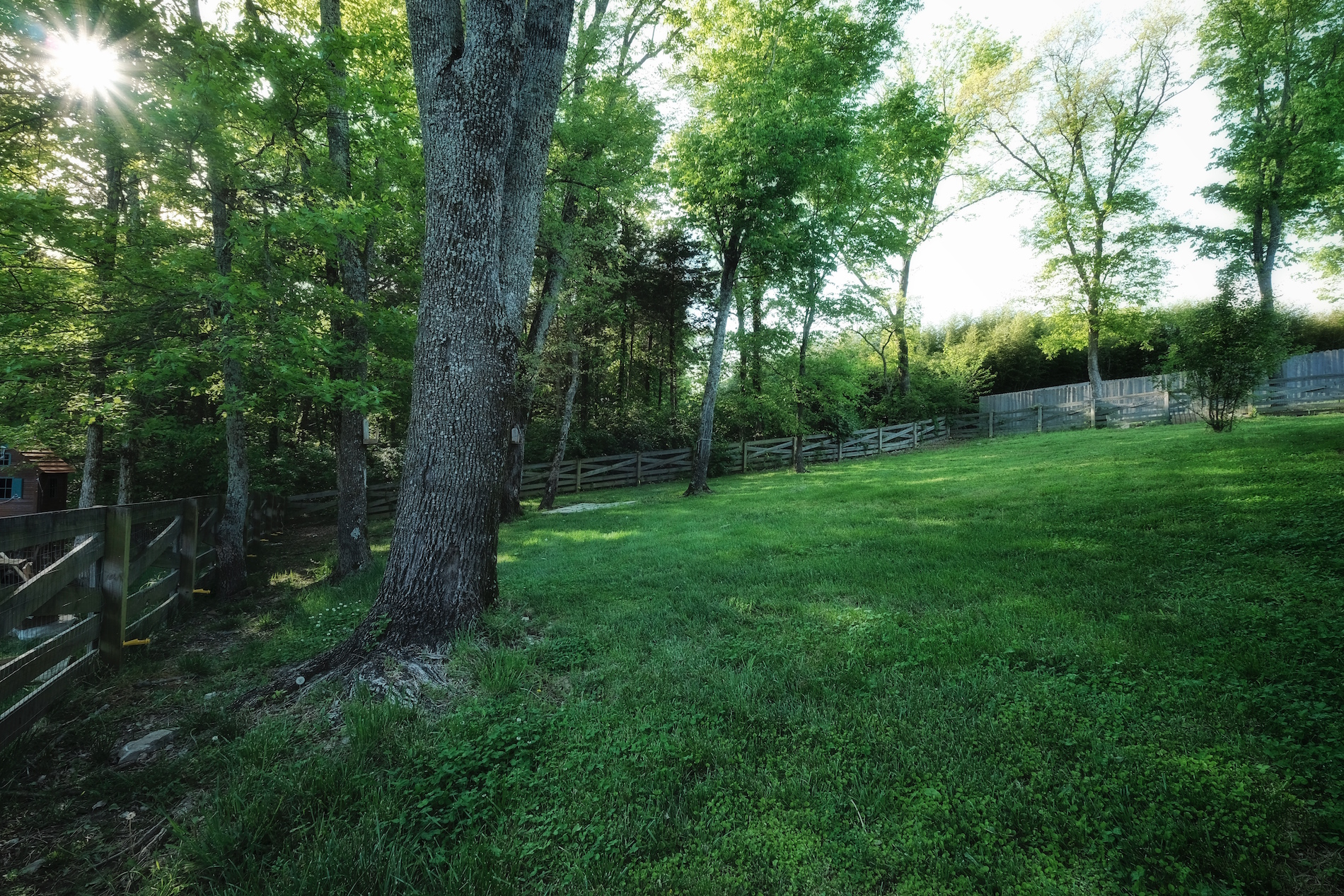 Large fenced back yard with privacy in Nolensville, TN