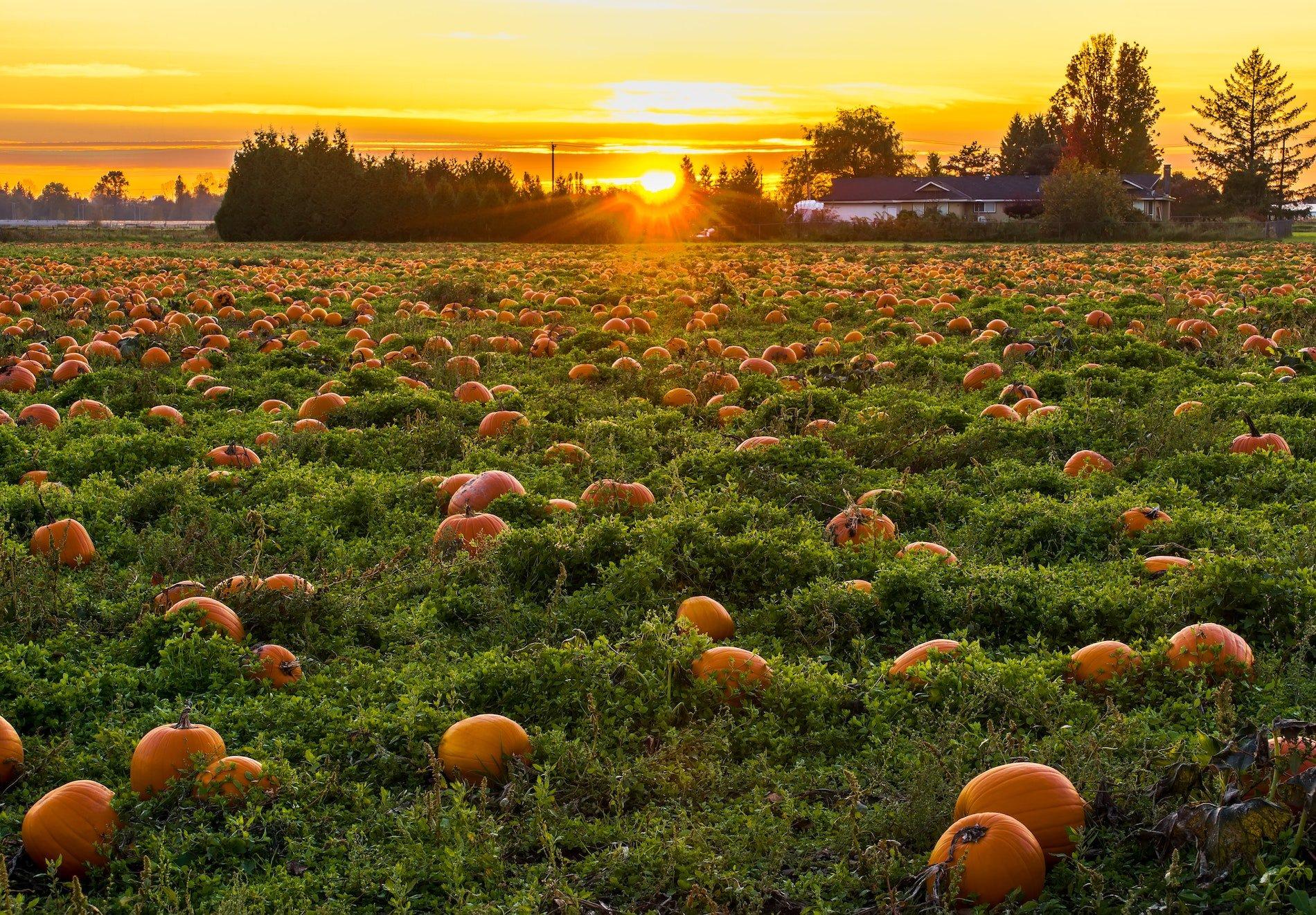Pumpkin Patch Openings around Nashville, Tennessee