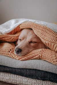dog comfortable between knit blankets