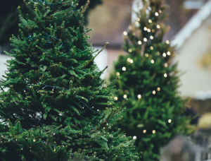 where to buy a real Christmas tree in Middle Tennessee